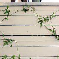 ウッドフェンス パイン材 白塗装フェンス