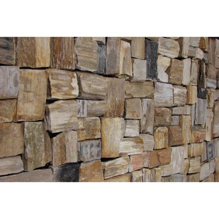 木の化石 タイル